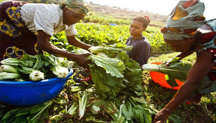 Household vegetable gardening potential for family nutrition and household welfare - a case of Kasese District in Uganda