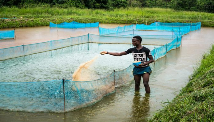 Commercial aquaculture in Kenya: Key limitations of Fish Feeds, Feed Management Practices and Opportunities