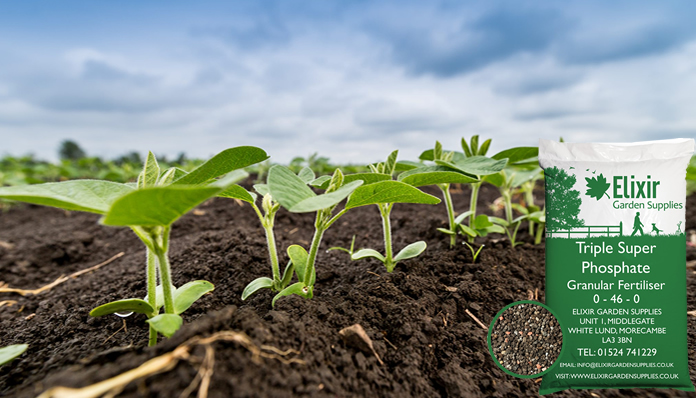 Effects of Triple Super Phosphate and inoculant on yield of soybean seed in Northern Region of Ghana