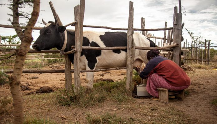 Milk Handling Practices and Utilization at Dairy Farms and Collection Centers under Rural And Peri-Urban Milk Value Chain Systems In Nakuru County, Kenya